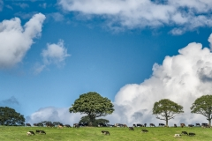 Clouds and Cows, Wales, UK